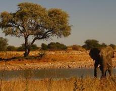 Elephant-in-Africa-by-Chris-Bilko